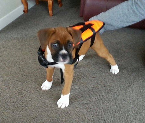 Life Jackets for the whole family